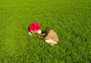 Botswana Listing to Spur Seed Co's Growth