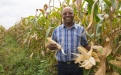 Maize Grower