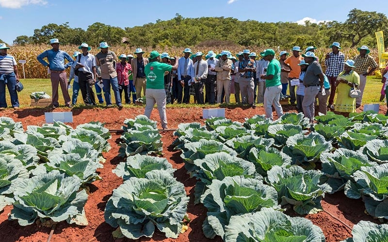 Commercial Farmers Field Day RARS 2019